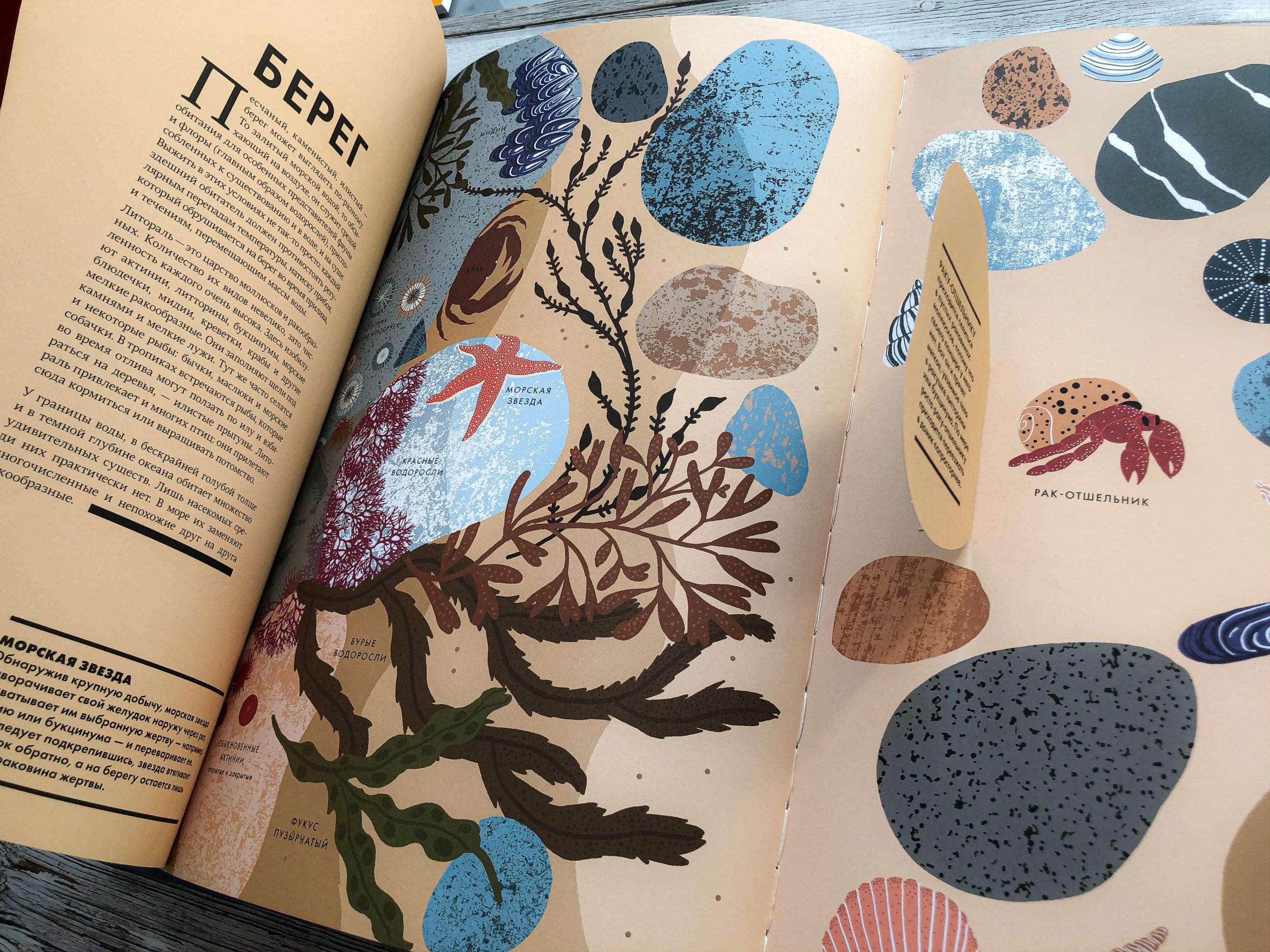 Нереально красивая книга Океан для захватывающих уроков естествознания 10
