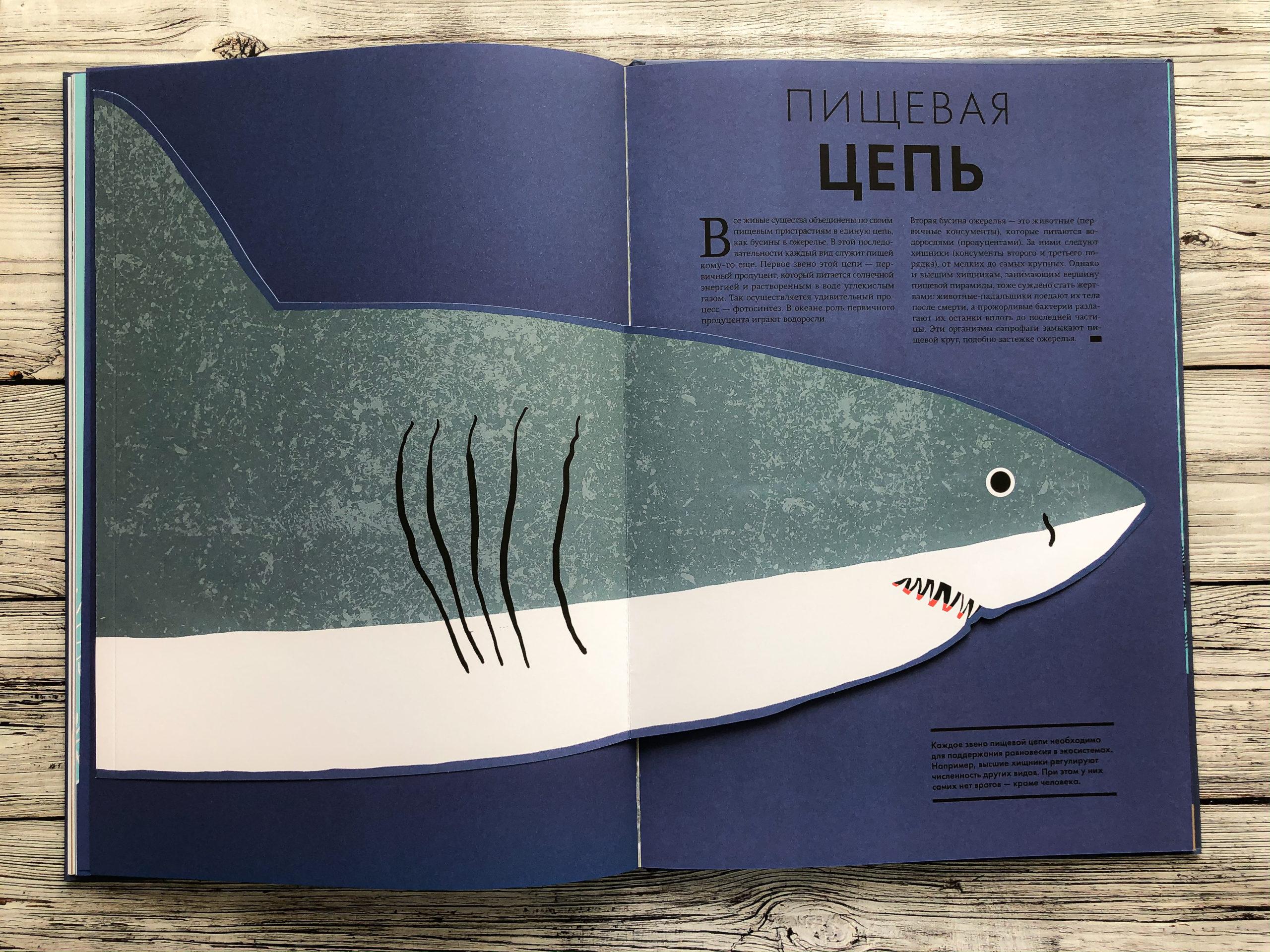 Нереально красивая книга Океан для захватывающих уроков естествознания 13