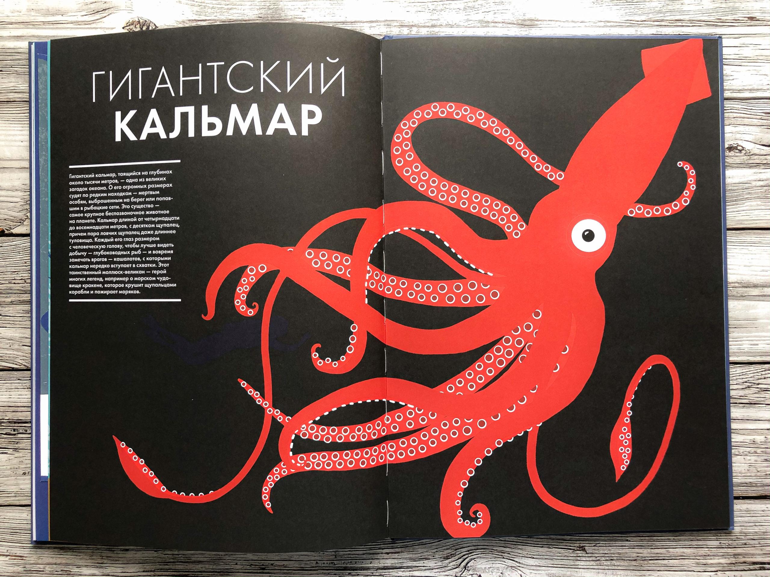 Нереально красивая книга Океан для захватывающих уроков естествознания 15