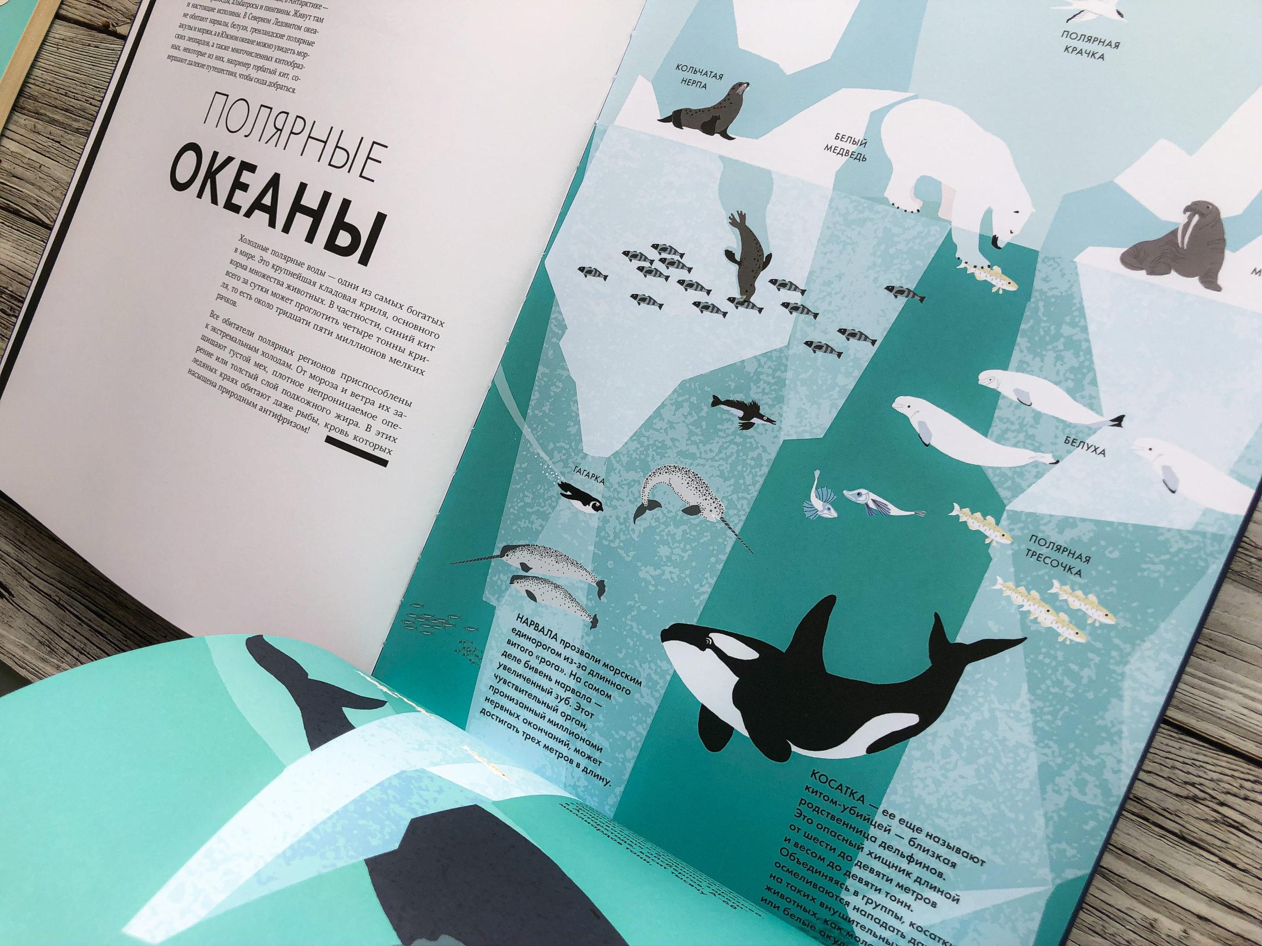 Нереально красивая книга Океан для захватывающих уроков естествознания 18