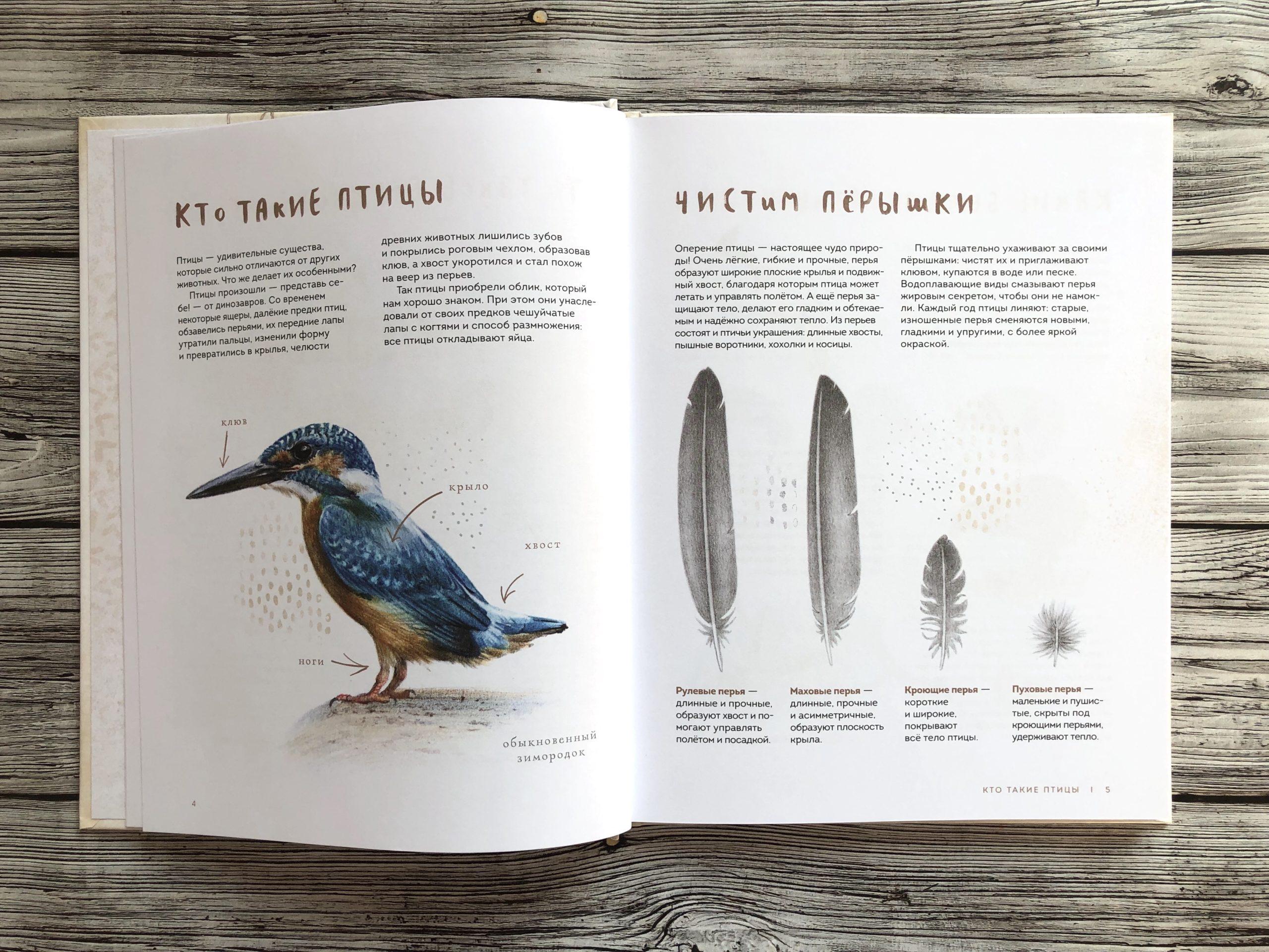 Очень красивая и полезная книга о птицах для детей - Птицы в городе 4