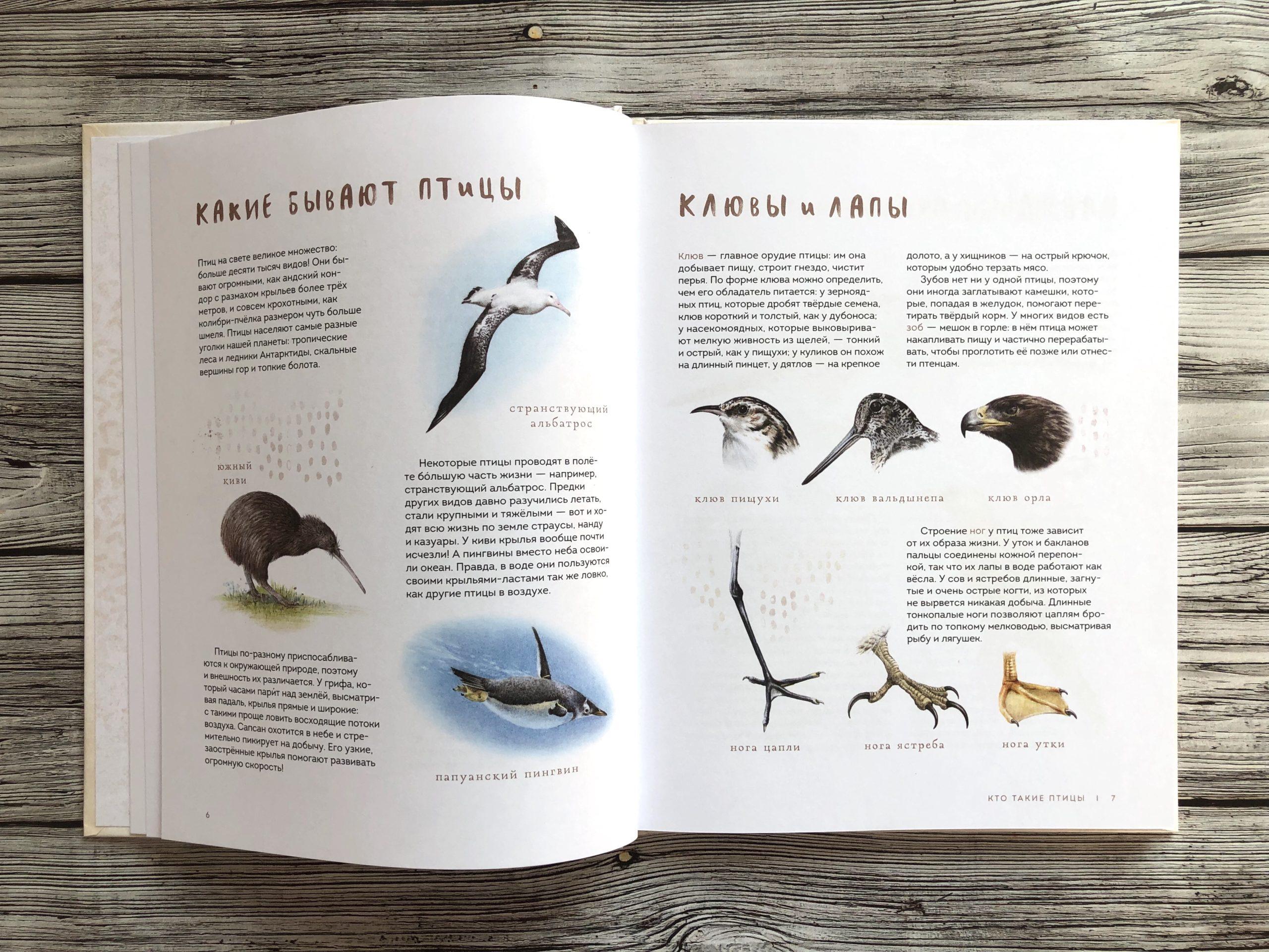 Очень красивая и полезная книга о птицах для детей - Птицы в городе 5