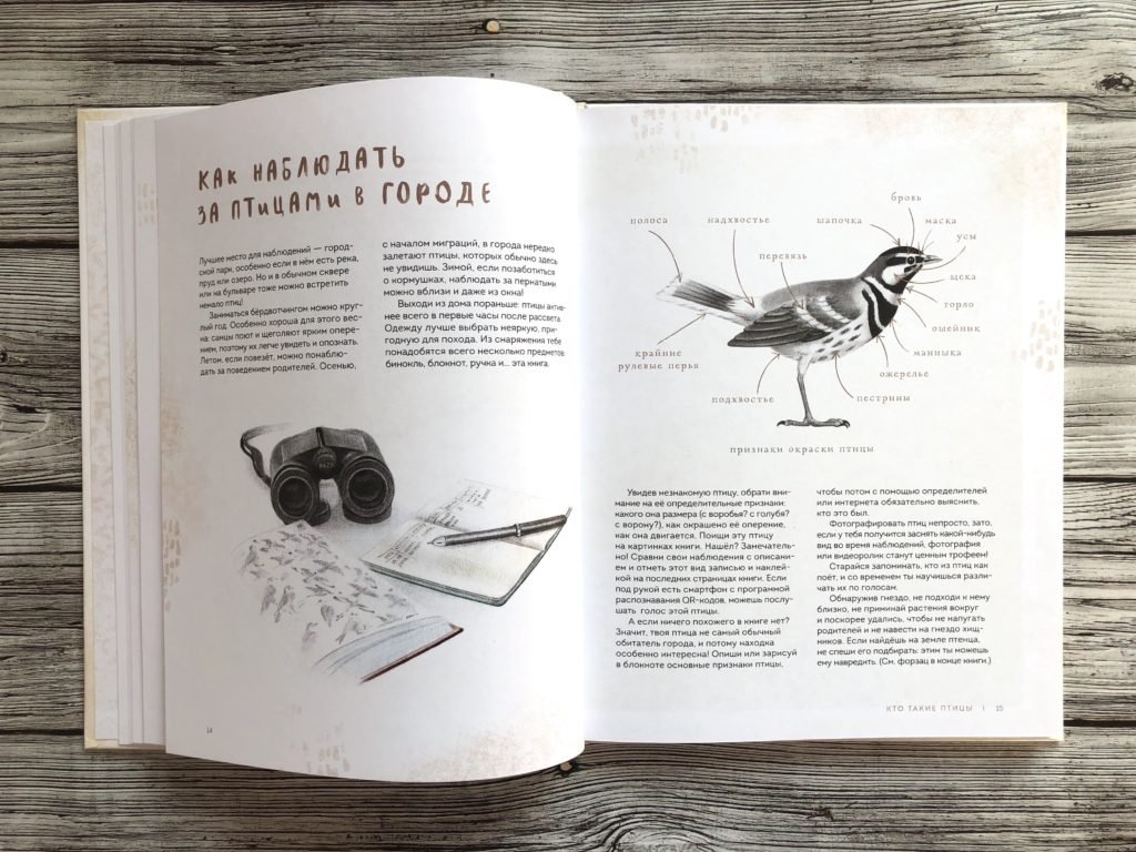 Очень красивая и полезная книга о птицах для детей - Птицы в городе 7