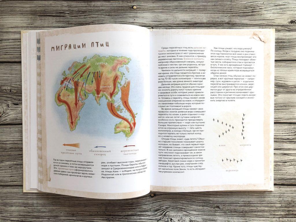 Очень красивая и полезная книга о птицах для детей - Птицы в городе 13
