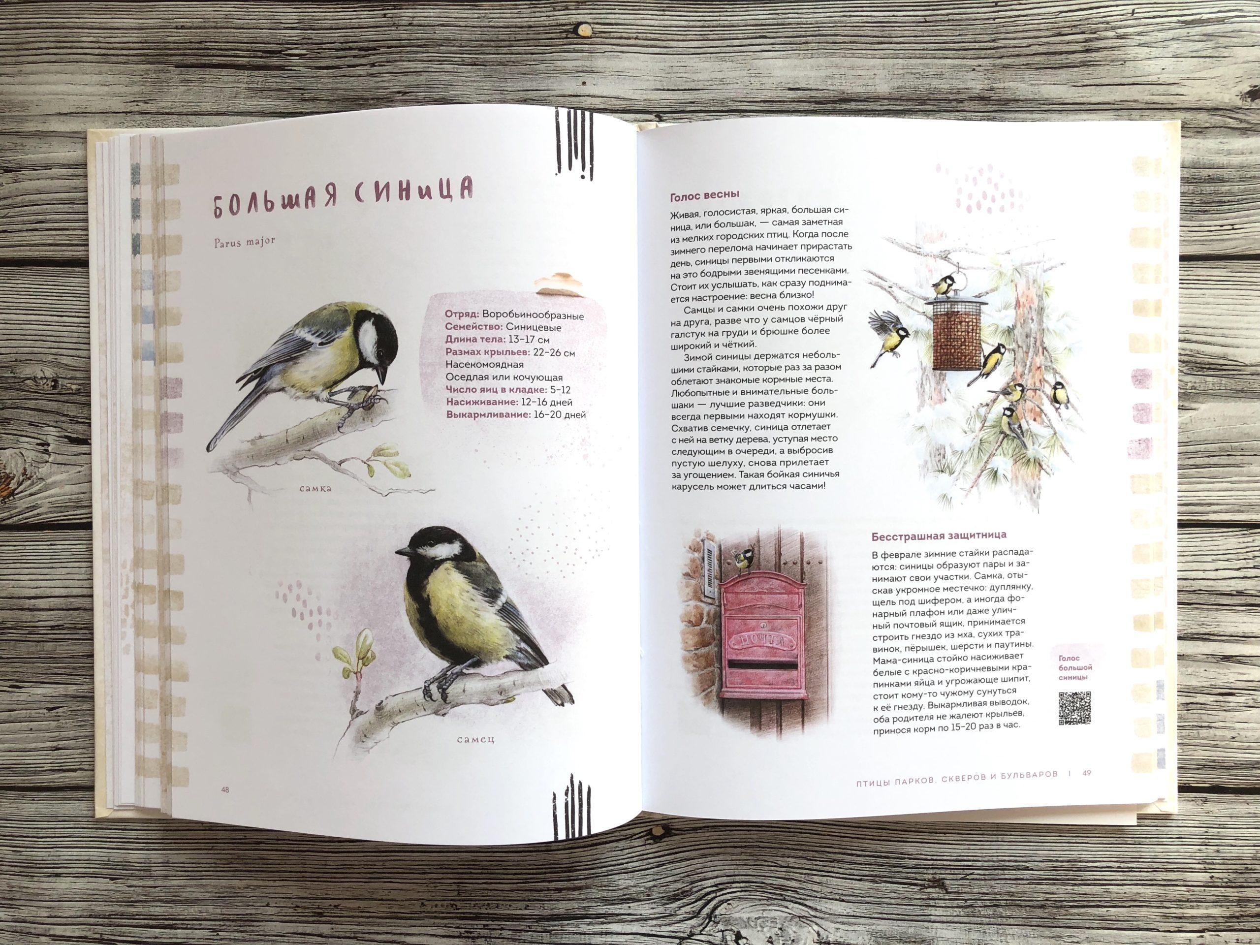 Очень красивая и полезная книга о птицах для детей - Птицы в городе 10