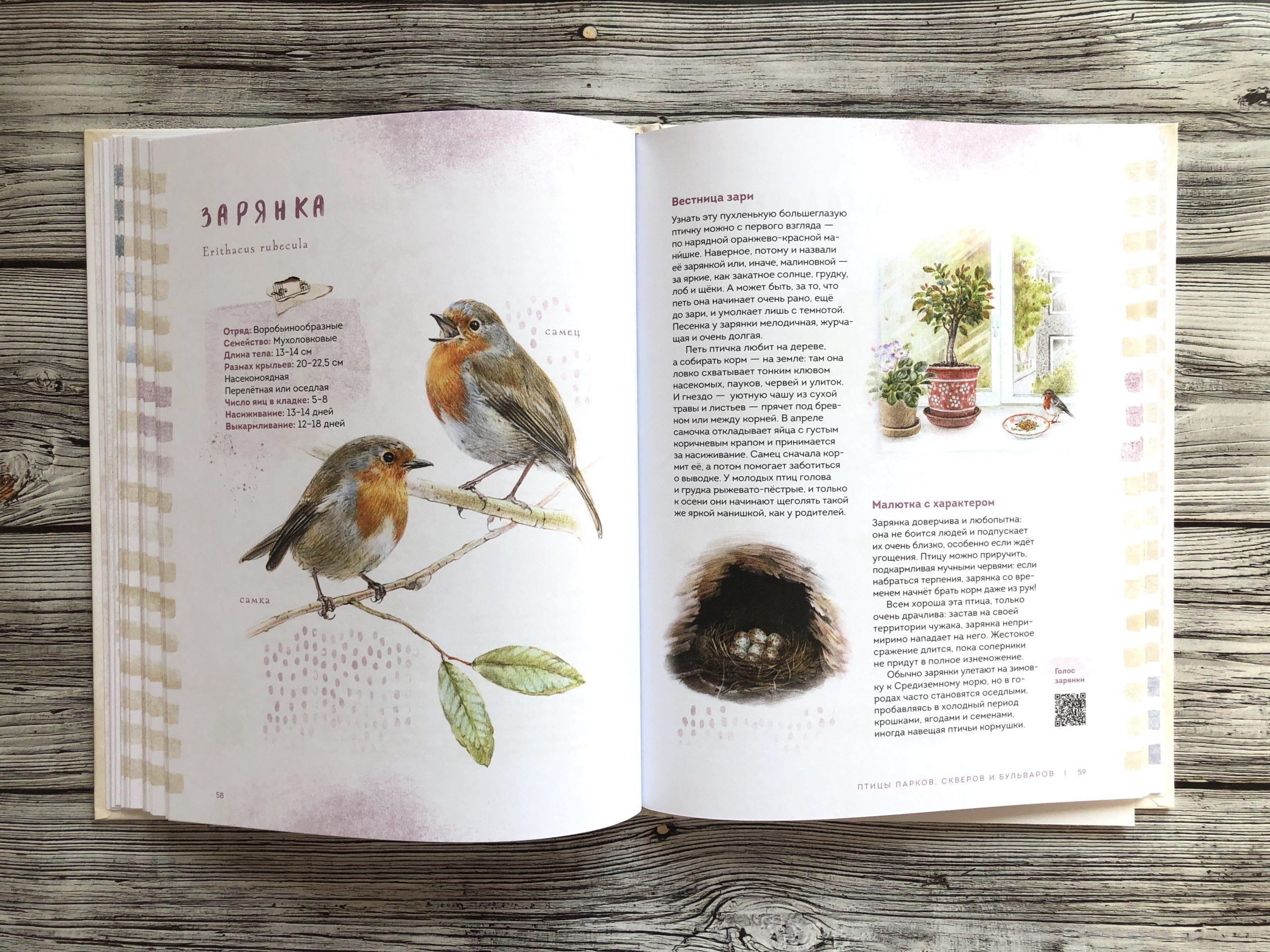 Очень красивая и полезная книга о птицах для детей - Птицы в городе 11