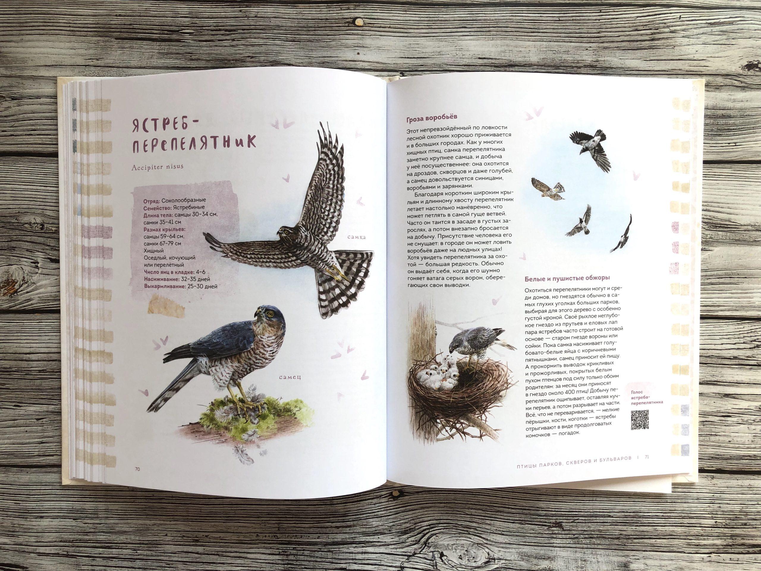 Очень красивая и полезная книга о птицах для детей - Птицы в городе 12