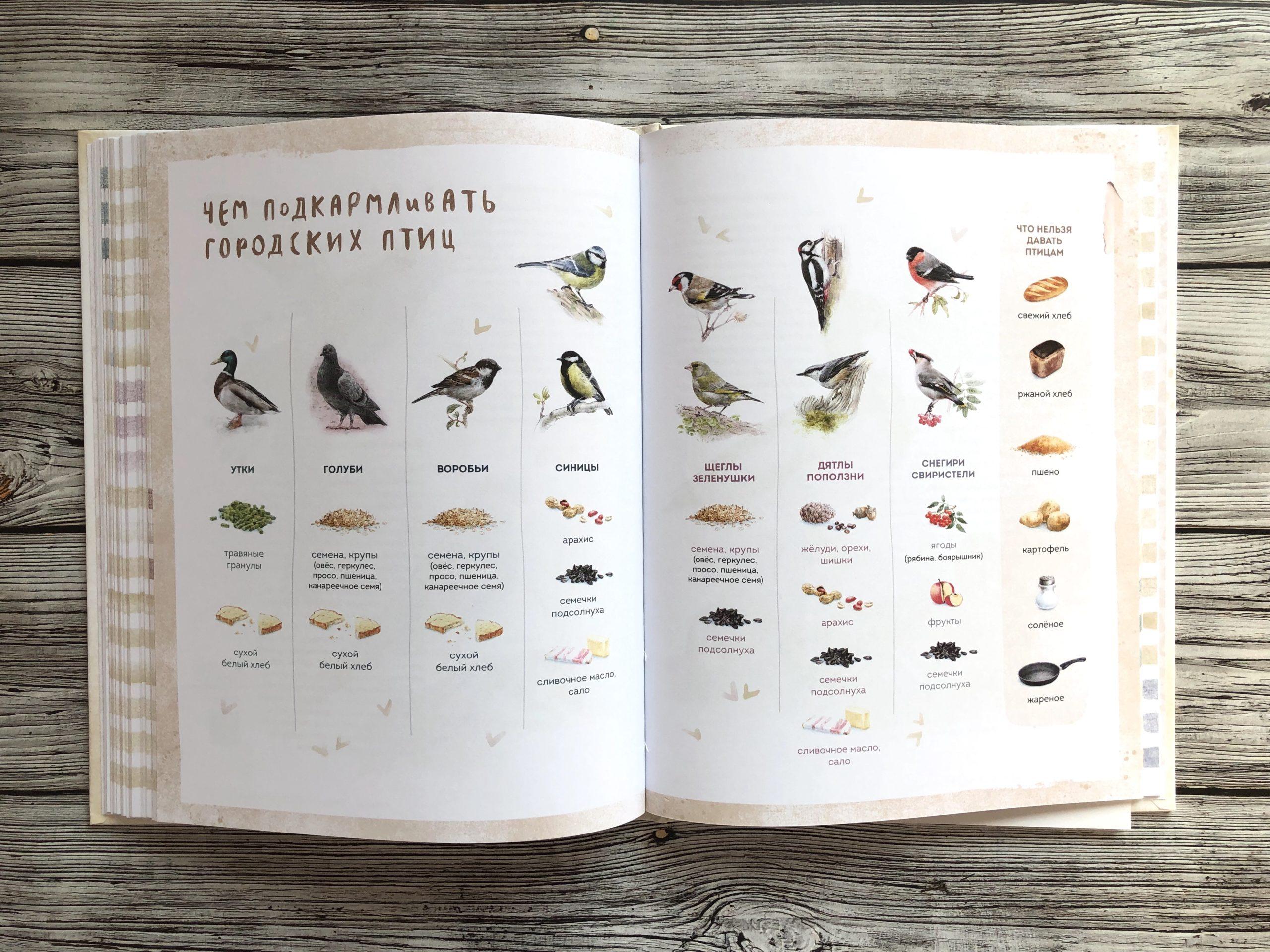 Очень красивая и полезная книга о птицах для детей - Птицы в городе 15