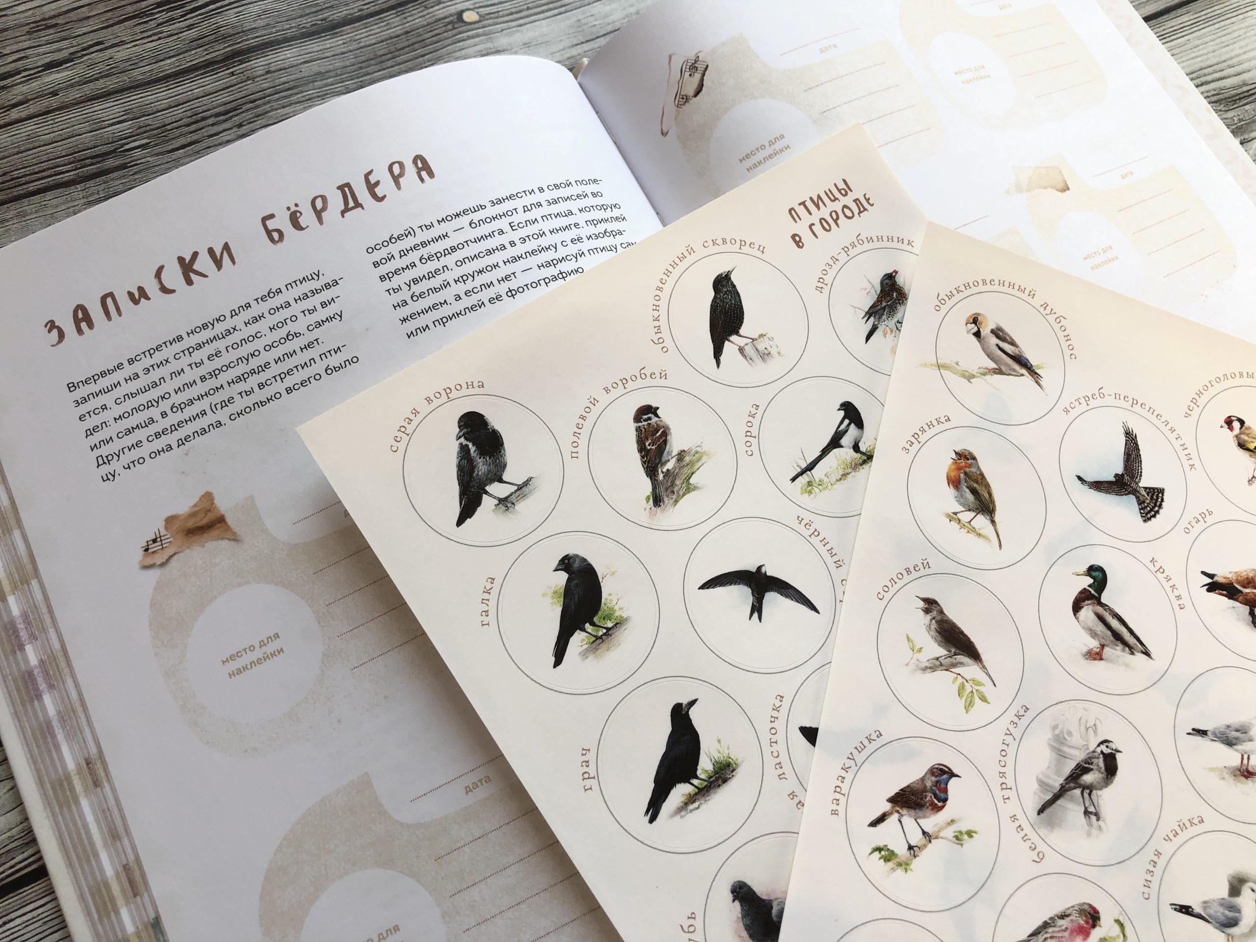 Очень красивая и полезная книга о птицах для детей - Птицы в городе 17
